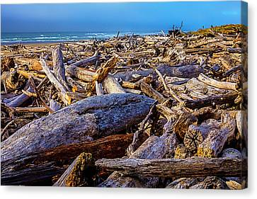 Piles Of Driftwood On Beach Canvas Print by Garry Gay