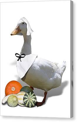 Pilgrim Duck Canvas Print