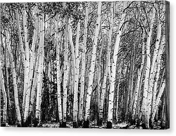 Pillars Of The Wilderness Canvas Print by James BO Insogna