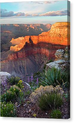Grand Canyon National Park Canvas Print - Pima Point Bloom  by Mike Buchheit