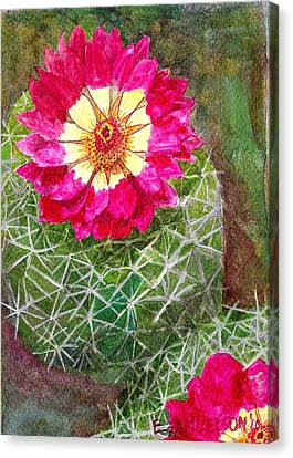 Pincushion Cactus Canvas Print by Eric Samuelson