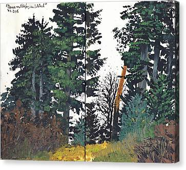 Pine And Fir Tree Forest Canvas Print
