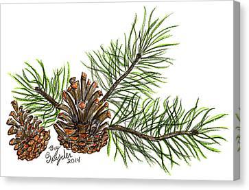 Pine Branch Canvas Print