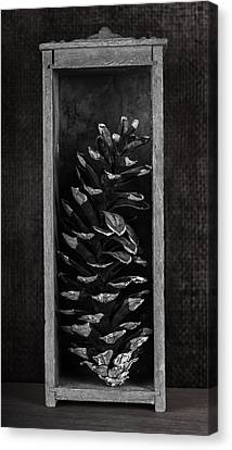 Pine Cone In A Box Still Life Canvas Print by Tom Mc Nemar