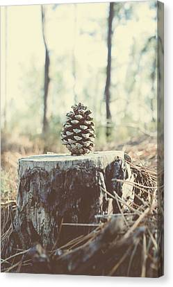 Pine Cone Canvas Print by Marco Oliveira