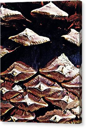Pine Cone Canvas Print by Sarah Loft