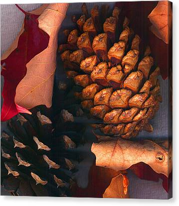 Pine Cones And Leaves Canvas Print by Nancy Mueller