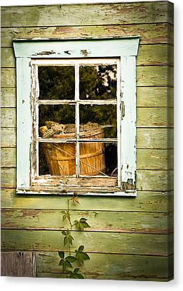 Pine Cones In The Window Canvas Print by Maggie Terlecki