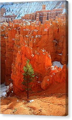 Pine Hoodoos At Bryce Canyon Canvas Print by Pierre Leclerc Photography
