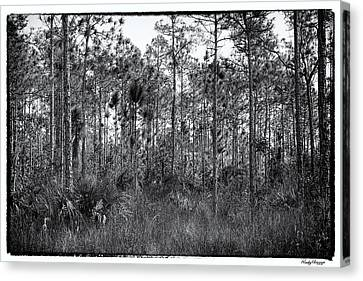 Pine Land In B/w Canvas Print by Rudy Umans