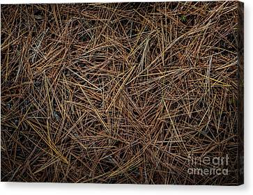 Pine Needles Canvas Print - Pine Needles On Forest Floor by Elena Elisseeva