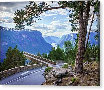 Canvas Print featuring the photograph Pine On Stegastein by Dmytro Korol