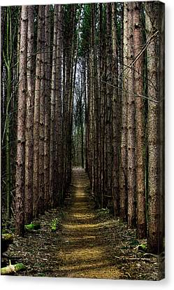 Pine Path  Canvas Print