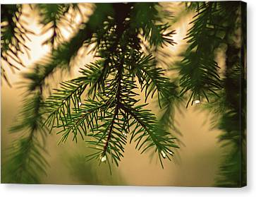 Canvas Print featuring the photograph Pine by Robert Geary