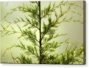 Canvas Print featuring the photograph Pine Shower by Brian Wallace