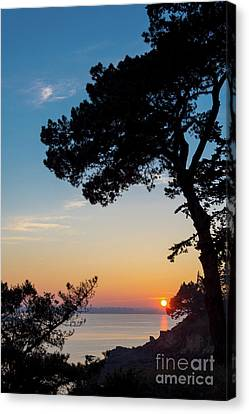 Canvas Print featuring the photograph Pine Tree by Delphimages Photo Creations