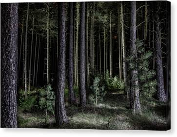 Pine Tree Forest At Night Canvas Print by Dirk Ercken
