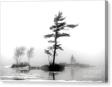 Pine Tree In Winter Fog Canvas Print by Olivier Le Queinec