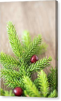 Pine Tree Needles Canvas Print by Taylor Martinsen