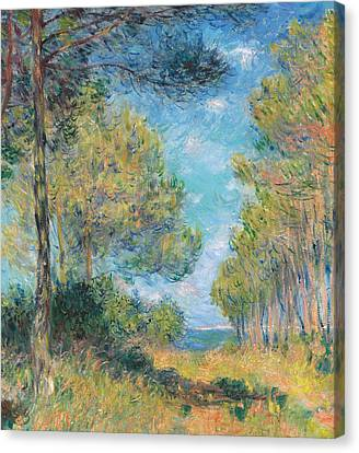 Pine Tree Path At Varengeville Canvas Print by Claude Monet