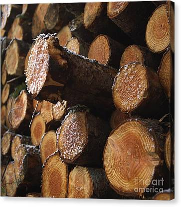Woodpile Canvas Print - Pine Trees by Bernard Jaubert