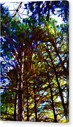 Pine Trees In Abstract 1 Canvas Print
