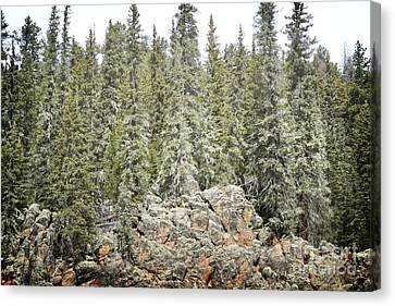Canvas Print featuring the photograph Pine Trees Rustic Mountain by Andrea Hazel Ihlefeld