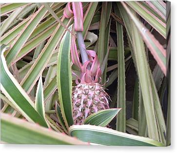 Pineapple Canvas Print by Be Aimless
