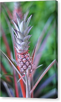 Pineapple Canvas Print by Kelly Wade