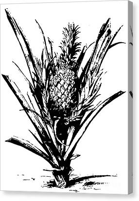 Apple Tree Canvas Print - Pineapple Plant With Fruit by Italian School
