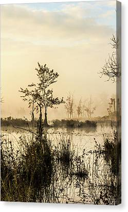 Pinelands - Mullica River Canvas Print
