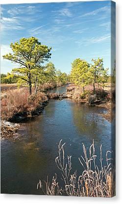 Pinelands Water Way Canvas Print