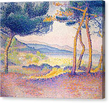 Pines Along The Shore, 1896 Canvas Print by Henri Edmond Cross