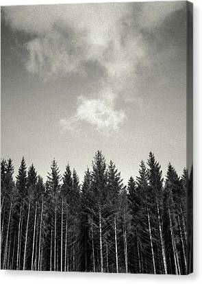 Pines And Clouds Canvas Print by Dave Bowman