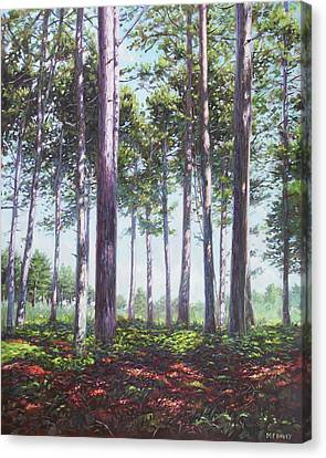 Canvas Print - Pines In New Forest Shade by Martin Davey