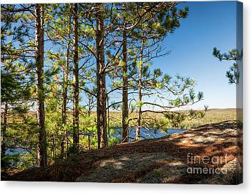 Pines On Sunny Cliff Canvas Print by Elena Elisseeva