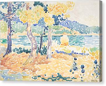 Pines On The Coastline Canvas Print by Henri-Edmond Cross