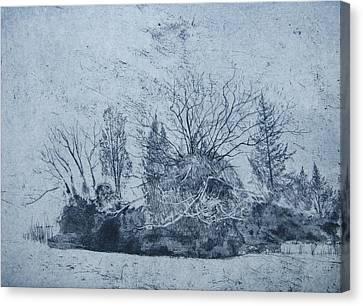 Pinetum  Cammo Canvas Print by Calum McClure