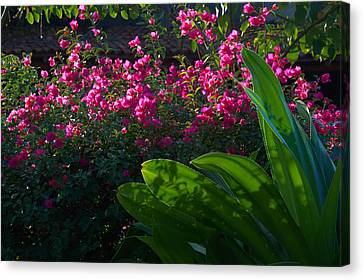 Pink And Green Canvas Print by Jim Walls PhotoArtist