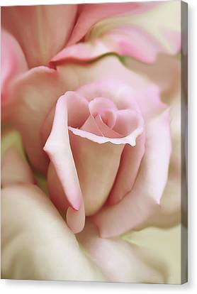 Pink And Ivory Rose Portrait Canvas Print by Jennie Marie Schell