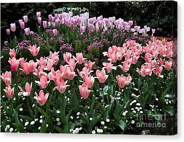 Pink And Mauve Tulips Canvas Print by Louise Heusinkveld