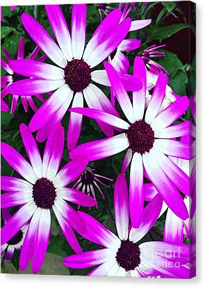 Pink And White Flowers Canvas Print by Vizual Studio