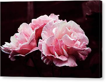 Pink And White Rose Art Canvas Print