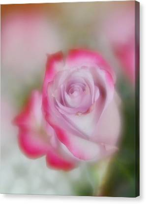 Canvas Print featuring the photograph Pink And White Rose  by Diane Alexander