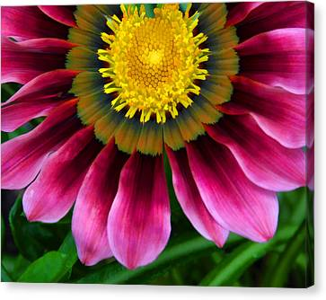 Pink And Yellow Canvas Print by Ann Bridges