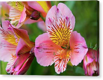 Pink And Yellow Flora Canvas Print