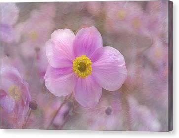Pink Anemone Canvas Print by Lena Photo Art