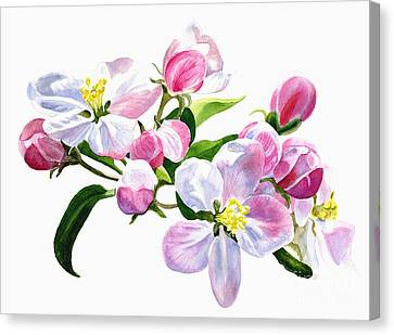 Pink Apple Blossoms Canvas Print by Sharon Freeman