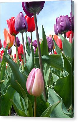 Pink Baby In Tulip Garden Canvas Print