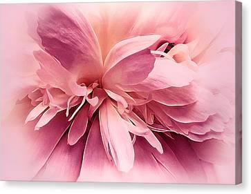 Pink Ballet Powder Puff Canvas Print by Darlene Kwiatkowski
